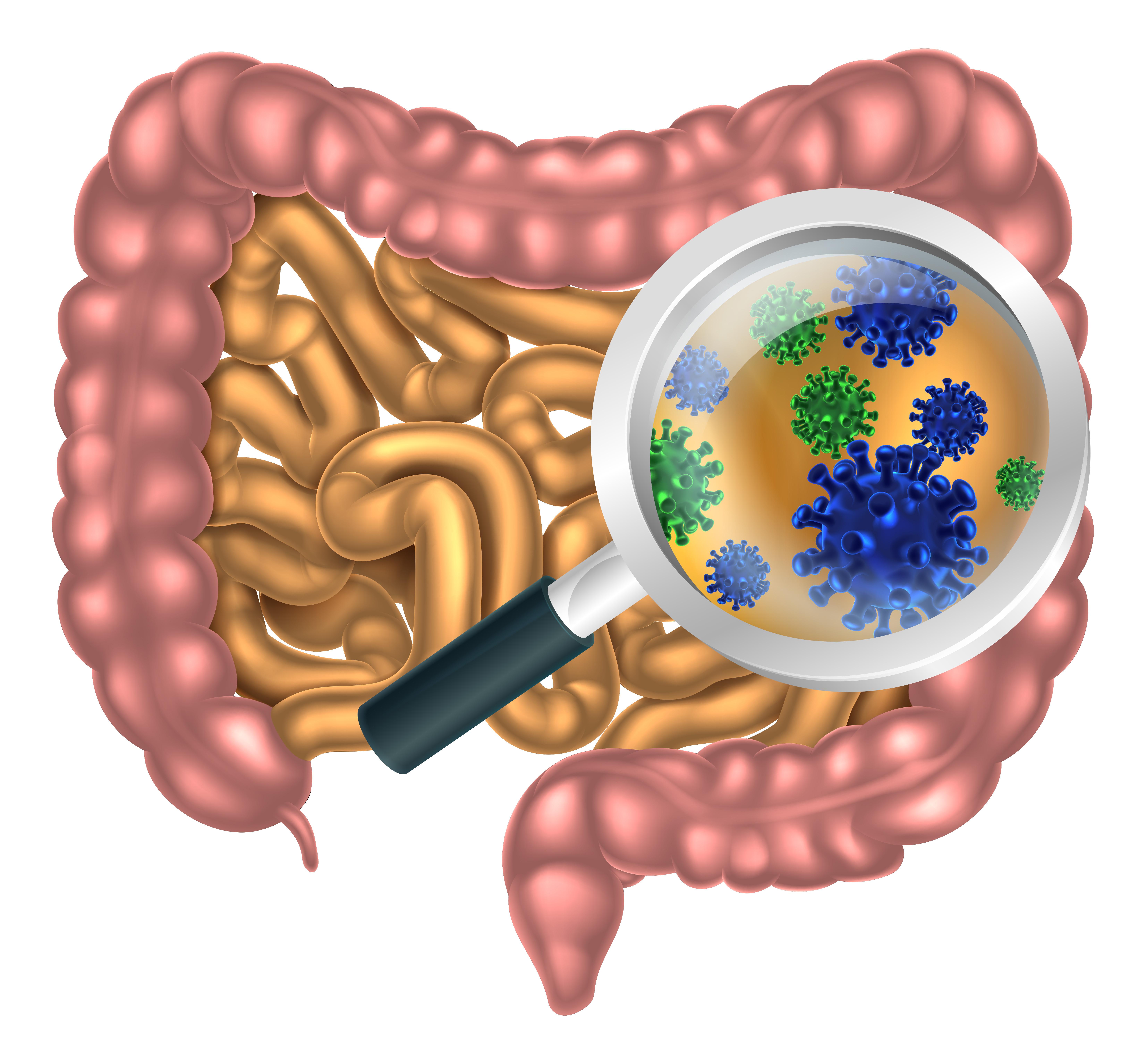 gute bakterien im darm